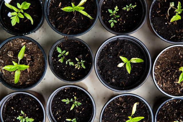 You don't have to be a green-fingered expert to turn your hand to gardening
